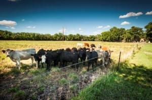 cow herd HLR efile