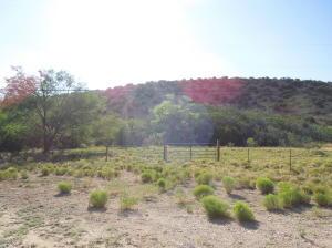 32 acres spring