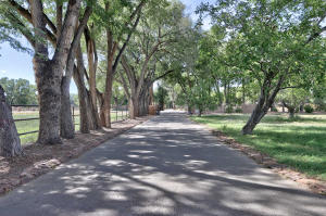 Tree lined drive into residence
