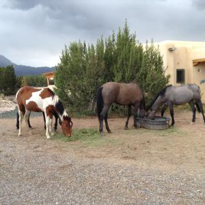 07 Horses