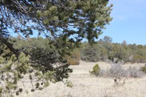 Pinon and Juniper