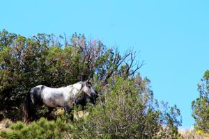 RF Stallion IMG_3659