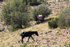 Wild horses IMG_3635