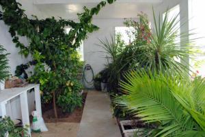 5 GREEN HOUSE (2)
