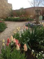 Spring Tulips of lower outdoor patio