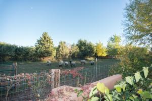 East Pasture 1