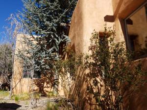 Pine, Desert Willow, Rose