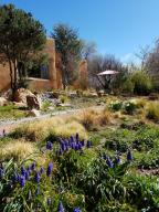 Grape hyacinth, daffodil...