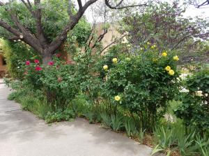 Rosebushes by Casita