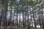 trees-light_kov