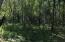 Clover Trees 1