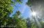 Clover Trees 5
