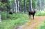 Moose by RV Pad