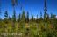 C4 Alaskan Wildwood Ranch(r)