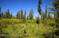 C7 Alaskan Wildwood Ranch(r) (8)