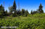 C16 Alaskan Wildwood Ranch(r) (17)