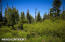 C16 Alaskan Wildwood Ranch(r) (23)