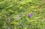 Wild Iris, geranuims, forget me nots