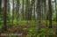 Trees & vegetation