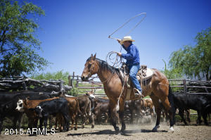 Ranch_Round_Up__3936