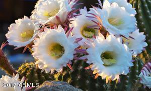 033_Desert Blooms