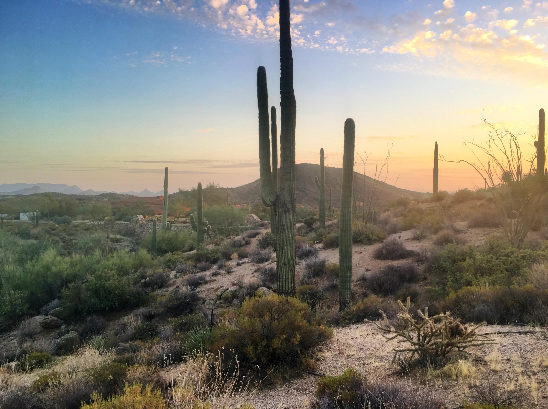 Photo of 9712 E HONEY MESQUITE Drive, Scottsdale, AZ 85262