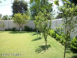 Fruit Trees in Backyard