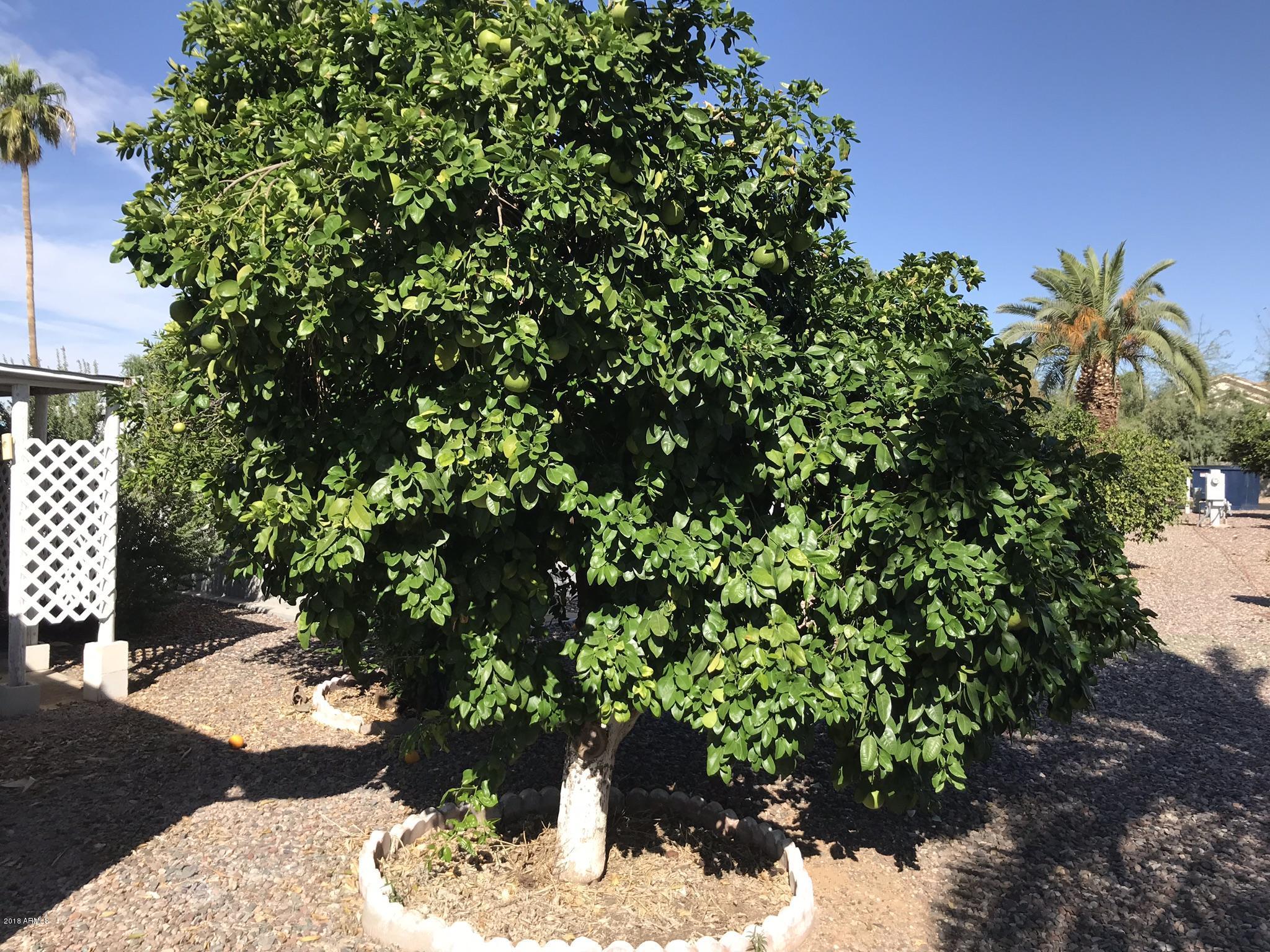 MLS 5843733 303 S Recker Road Unit 47, Mesa, AZ Mesa AZ Gated