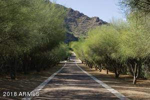 05 Palo Verde Trees along Drive