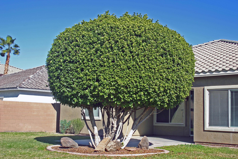 MLS 5846179 1572 S 174TH Lane, Goodyear, AZ 85338 Goodyear AZ Cottonflower