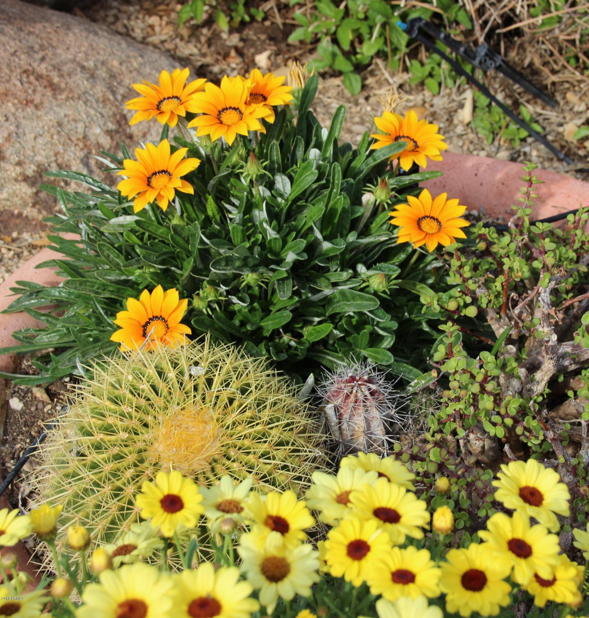 MLS 5857309 4826 E THUNDERBIRD Drive, Chandler, AZ 85249 Chandler AZ Sun Groves