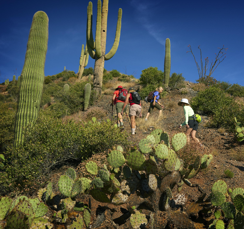 42290 N 100TH Way Scottsdale, AZ 85262 - MLS #: 5859258