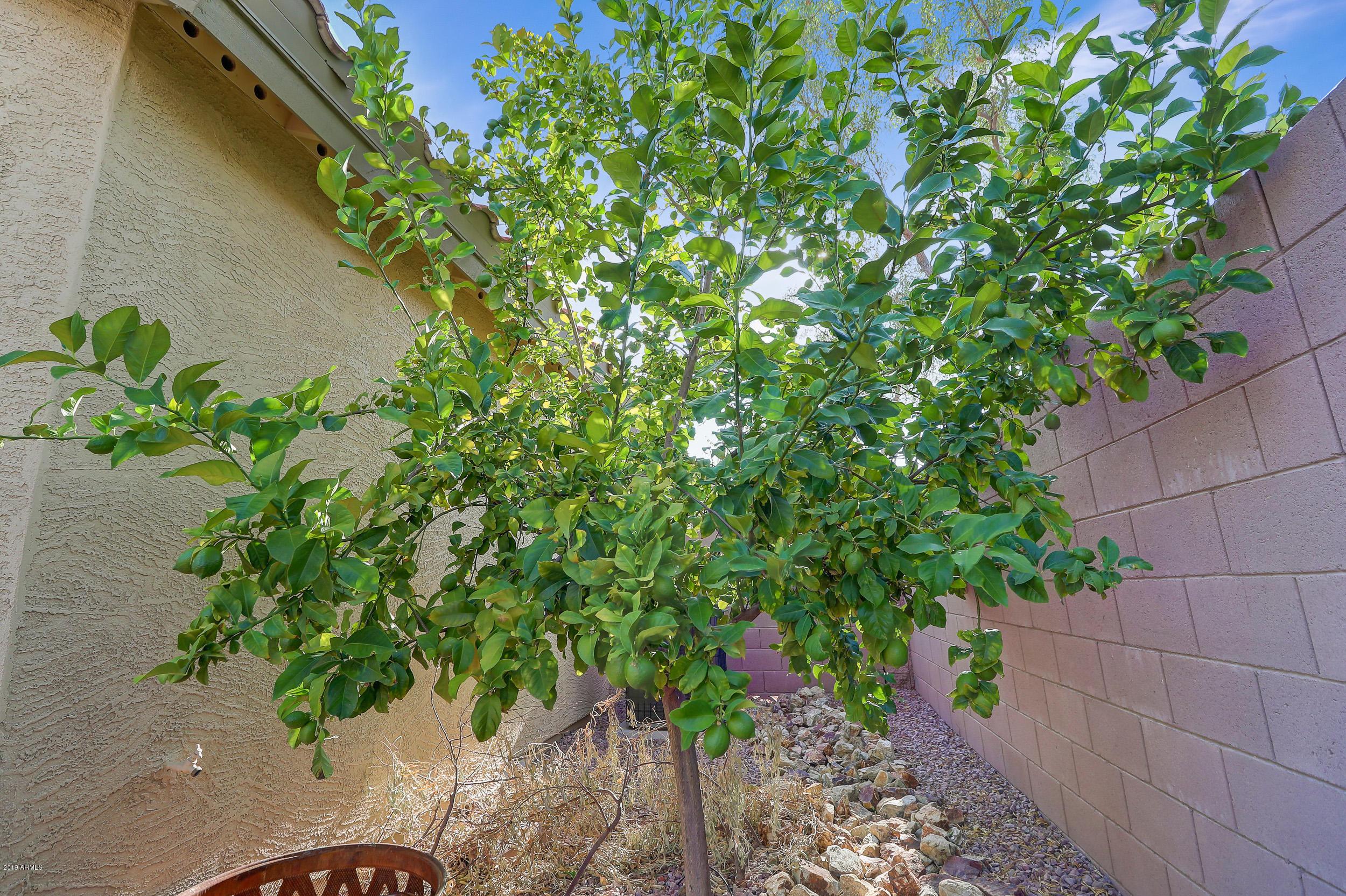 MLS 5955049 26613 N 21ST Drive, Phoenix, AZ 85085 Phoenix AZ Valley Vista