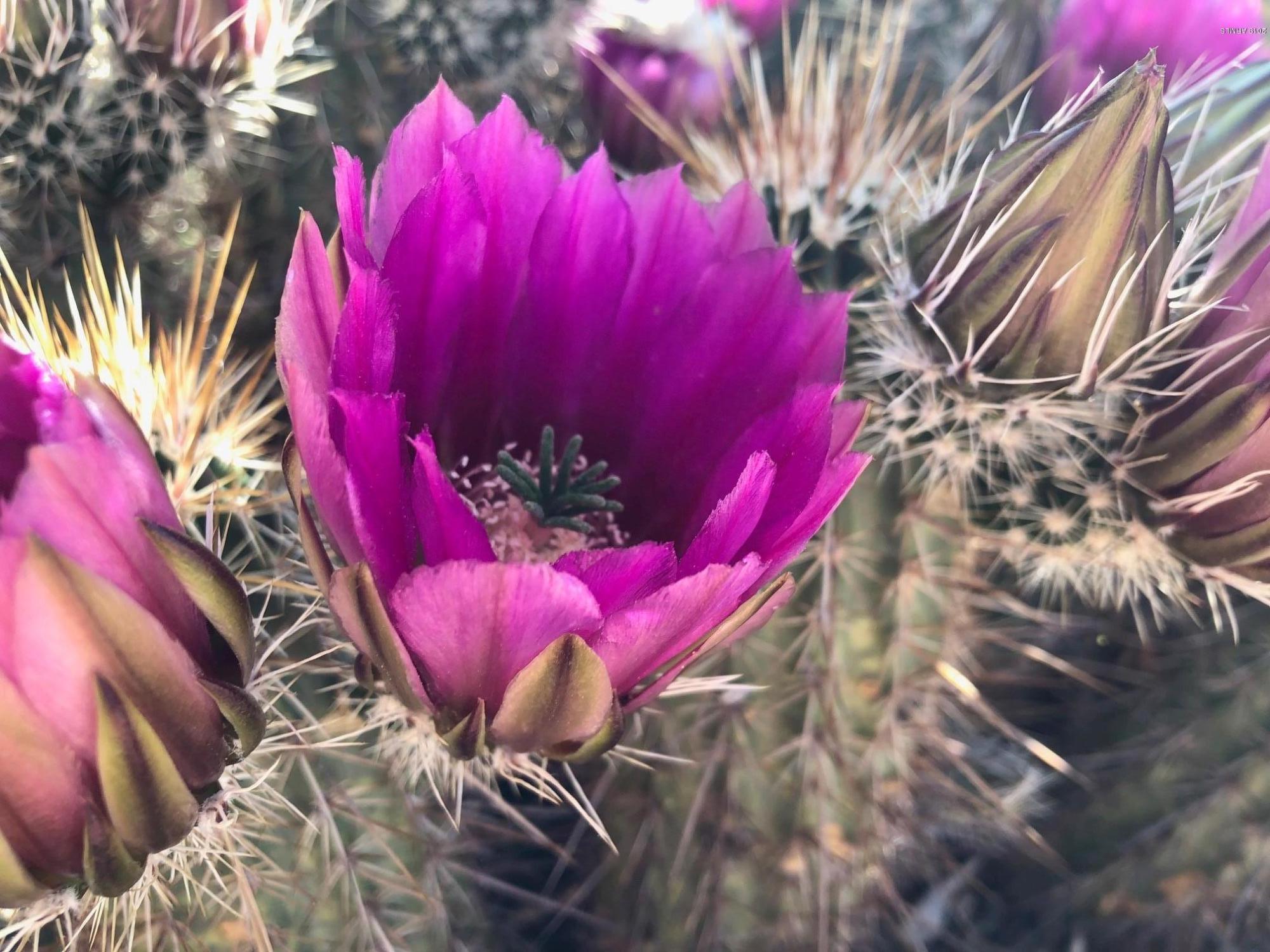 MLS 5957355 10230 E BLANCHE Drive, Scottsdale, AZ 85255 Scottsdale AZ McDowell Mountain Ranch