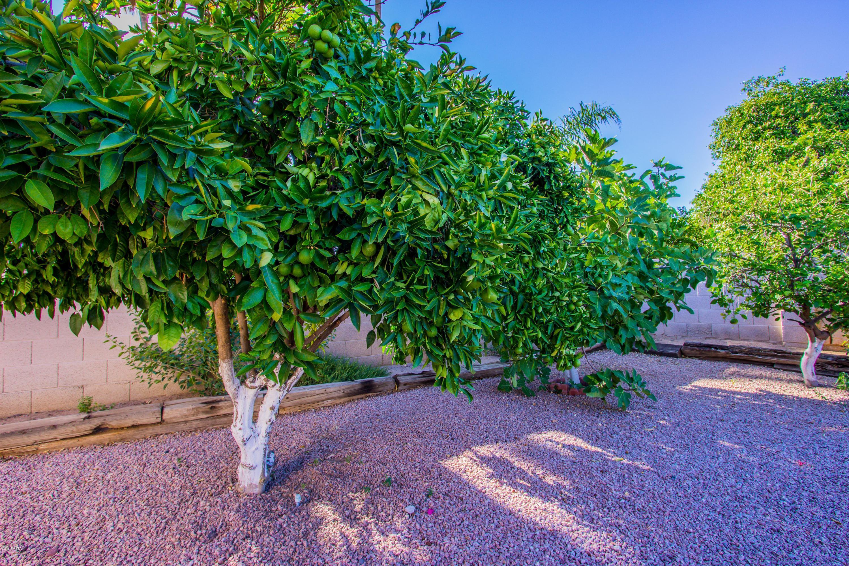 MLS 5966881 7420 E TURQUOISE Avenue, Scottsdale, AZ 85258 Scottsdale AZ Private Pool