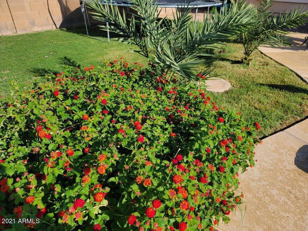 MLS 6276371 3109 E DENIM Trail Unit 245, San Tan Valley, AZ 85143 San Tan Valley AZ Rancho Bella Vista