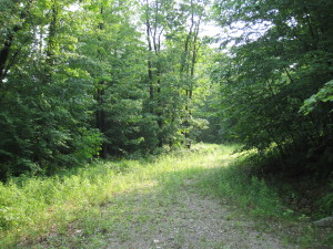 Mount Hunger Rd, Monterey, MA 01245