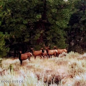 Soft Rock Elk