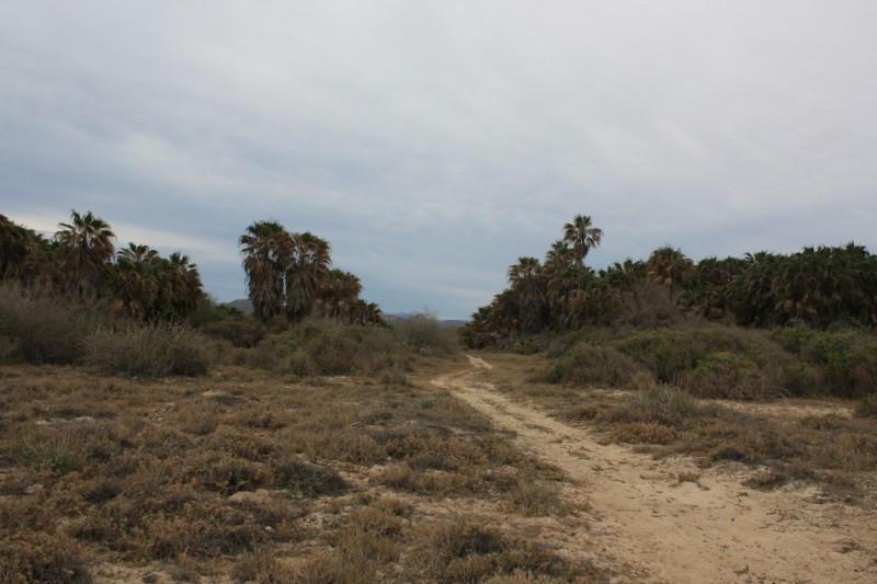 Rancho Los Pinos/ El Surgidero-4