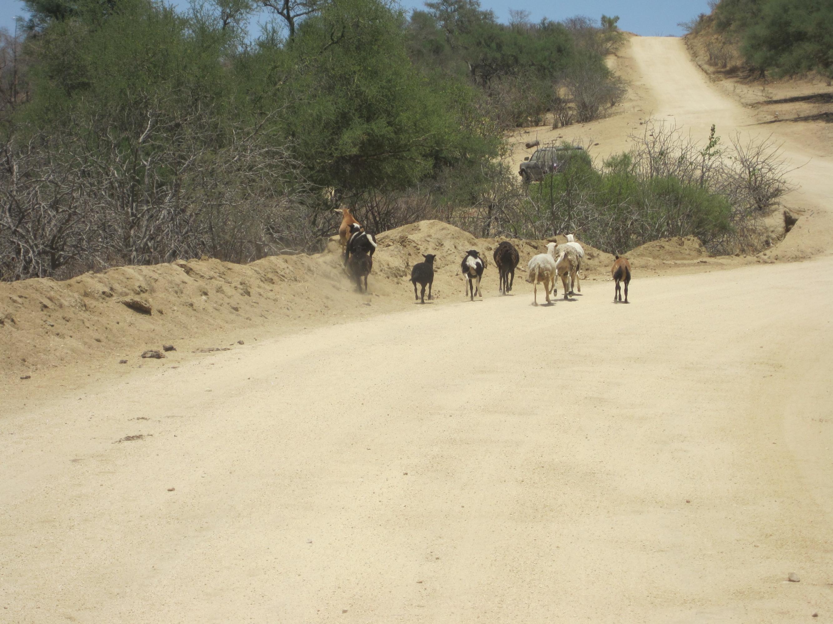 Rancho La Soledad-3