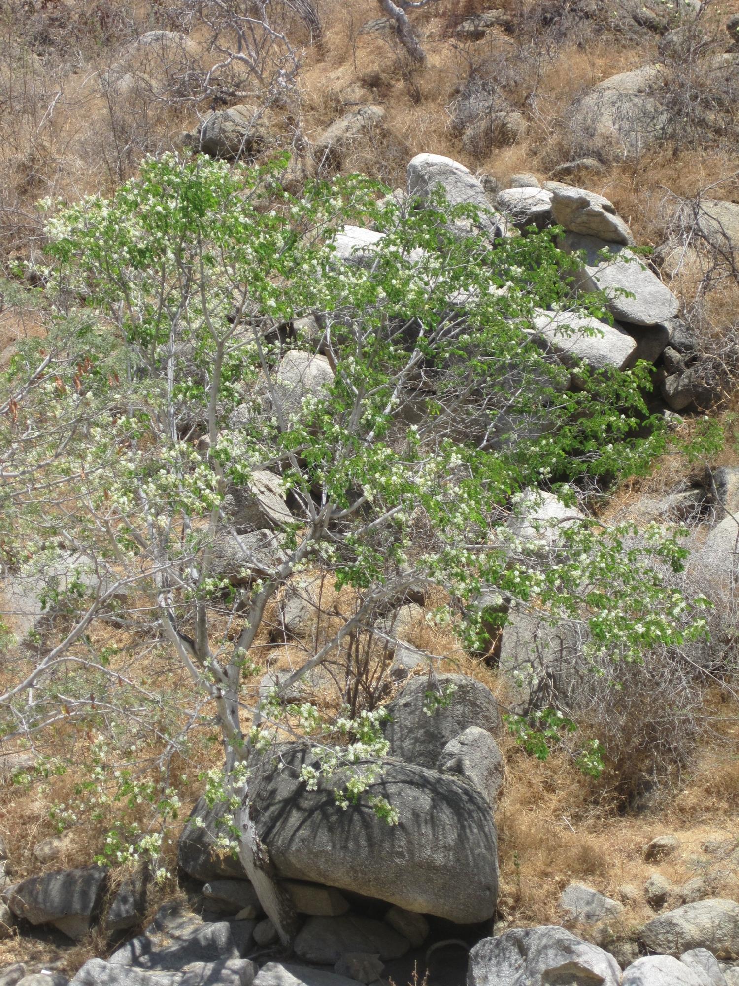 Rancho La Soledad-7