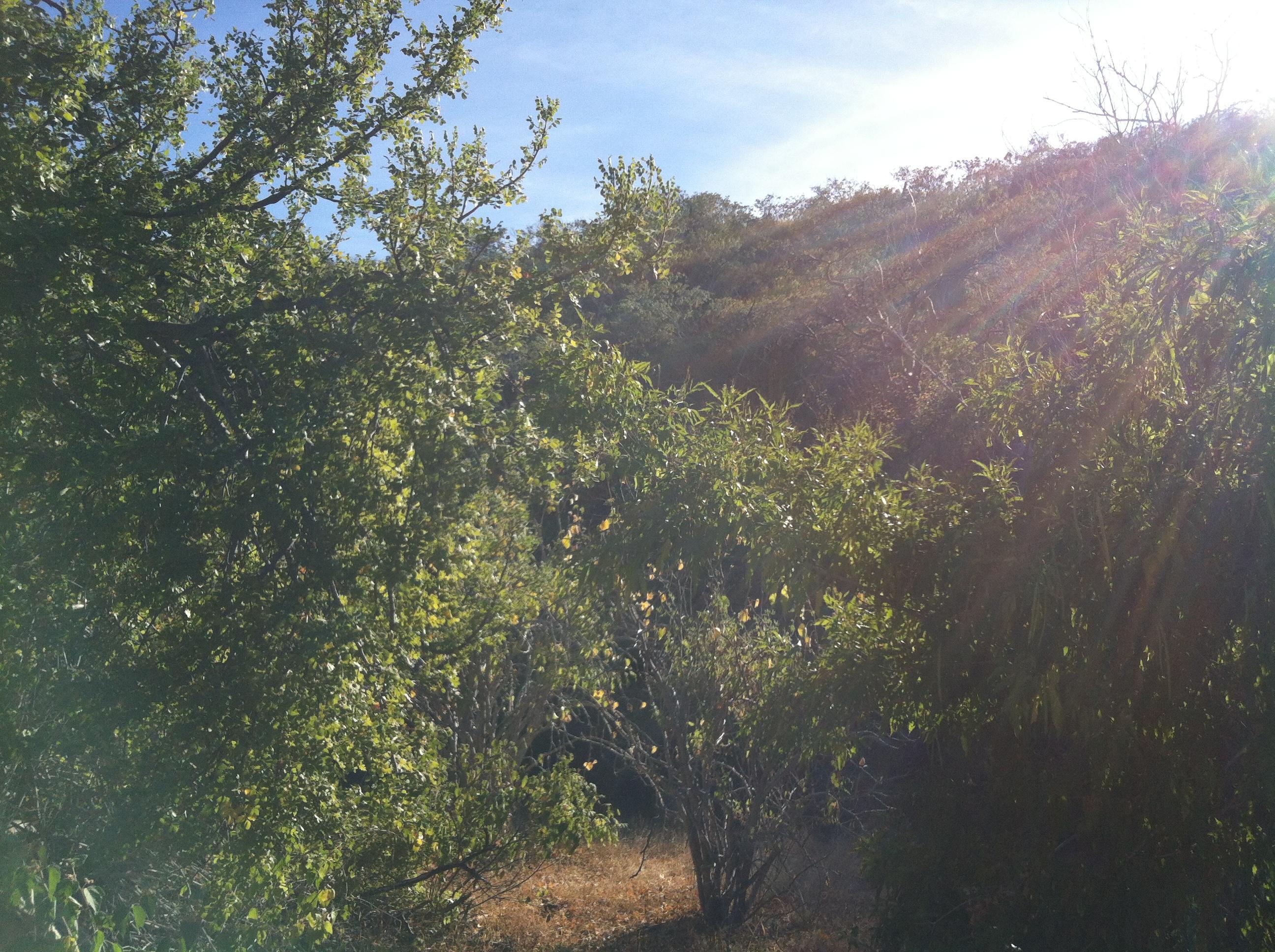 Montecito View Lot #5-2