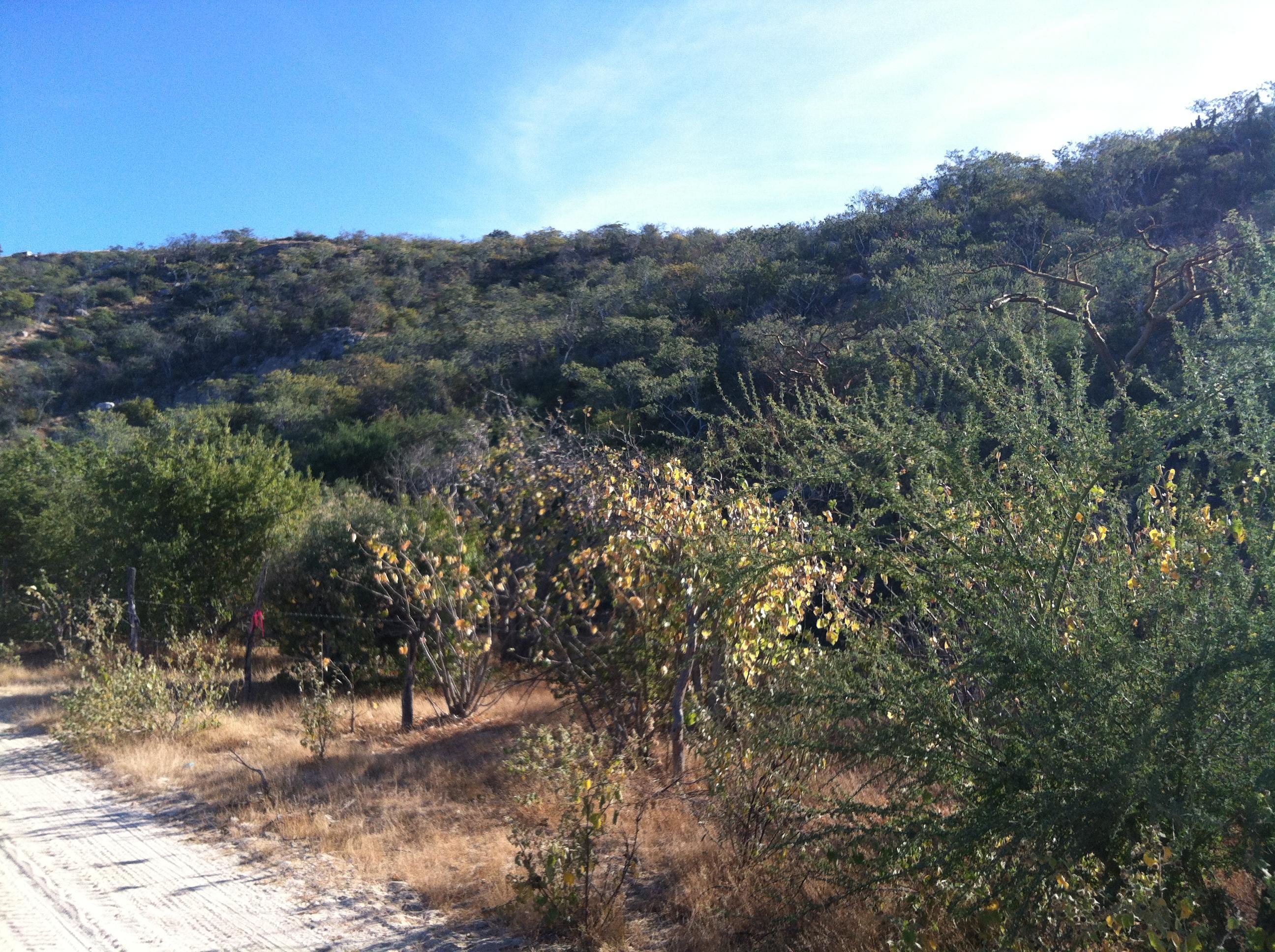 Montecito View Lot #5-4
