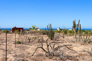Calle Torote Cardon Lot # 0821   property for sale