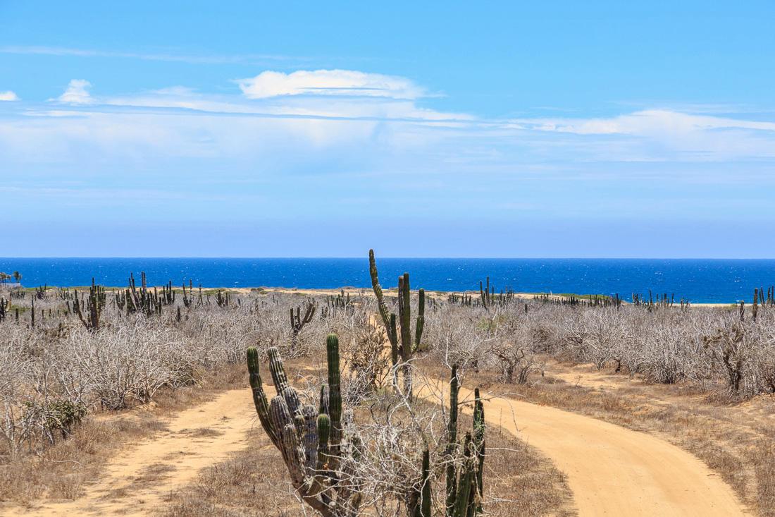 Pacific, ,Land,For Sale,Calle sin Nombre,16-804