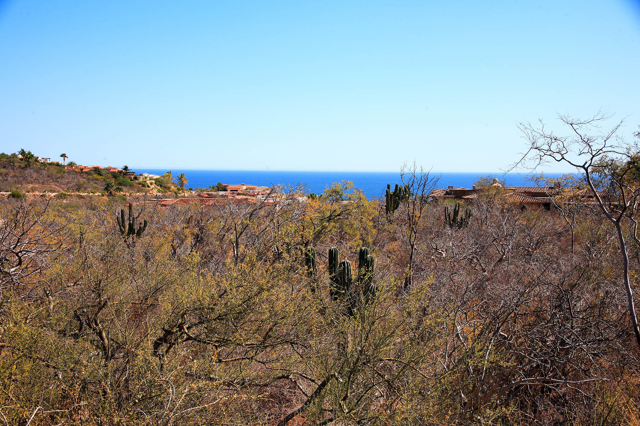 San Jose del Cabo, ,Land,For Sale,Ave. San Javier,17-648