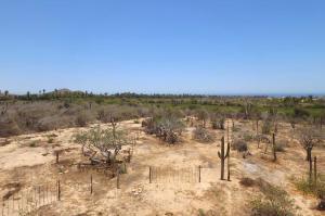 Cactus Garden Lot #1