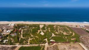 PALM ORCHARD Oceanfront 8