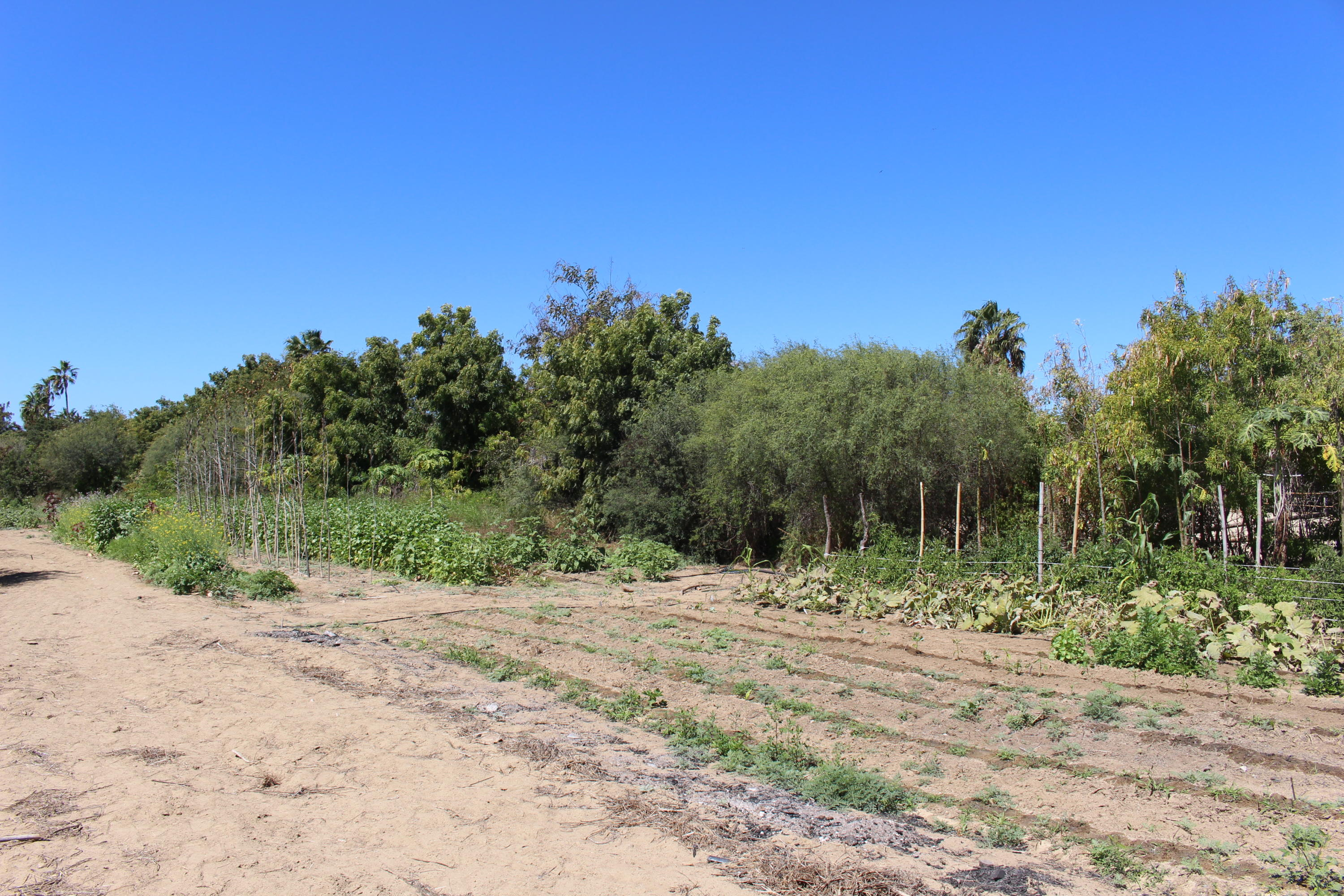 Food Forest * Investment Opp-15