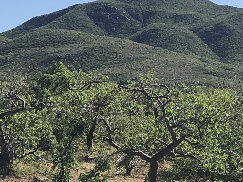 Rancho del Mar-4